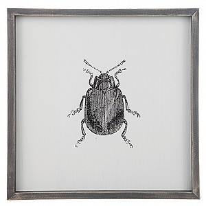 Tavla Insekt Skalbagge