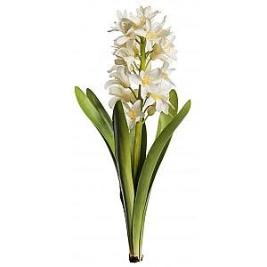 Hyacint Vit - 32 cm