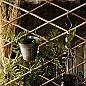 Spaljéer & Växtstöd
